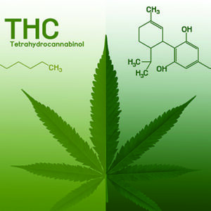 THC vs. CBD – What's the Difference?